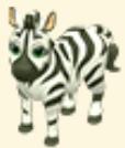 Zebra Family Farm Seaside
