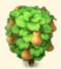 Butternut Squash Tree