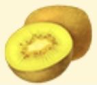 Golden Kiwifruit Family Farm Seaside