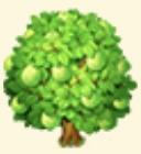 Guava Tree Family Farm Seaside