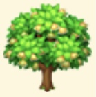 Hyuganatsu Tree Family Farm Seaside