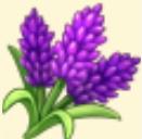 Lavender Family Farm Seaside