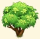 Matcha Tree Family Farm Seaside