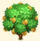 Pomelo Tree Family Farm Seaside