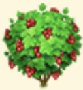 Red Currant Tree Family Farm Seaside