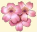 Sakura Flower Family Farm Seaside