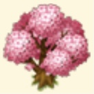 Sakura Tree Family Farm Seaside