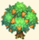Sea Buckthorn Tree Family Farm Seaside