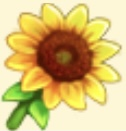 Sunflower Family Farm Seaside